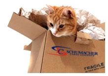 International Pet Relocation and Transport