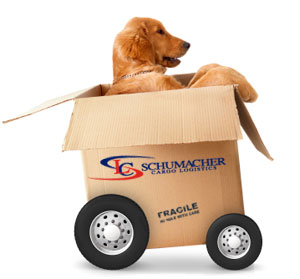 International Pet Moving