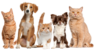 cats and dogs living in harmony ready to move