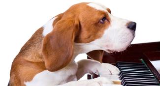 dog playing piano can move both internationally