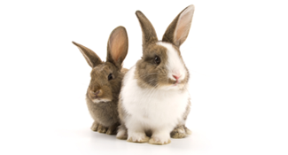 two bunny rabbits ready to move with you