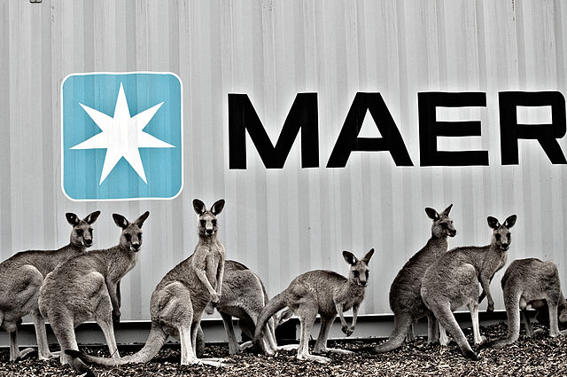 Kangaroos Next to a Shipping Container by Maersk line